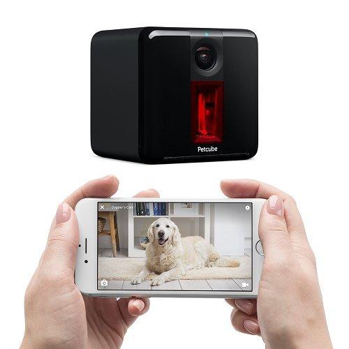 PetCube Review | PetCube Play Remote Wifi Pet Camera