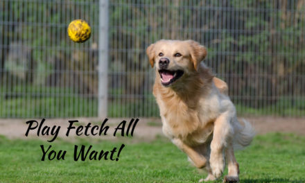 Best Dog Ball Launchers Compared – Which Automatic Ball Thrower Is Right For You?