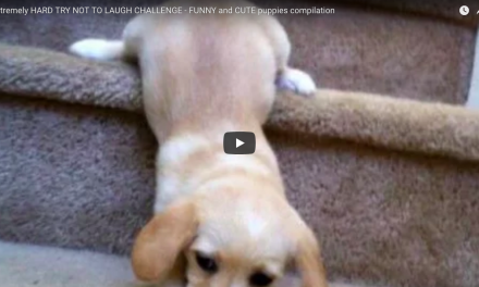 Cute Puppy Video Compilation