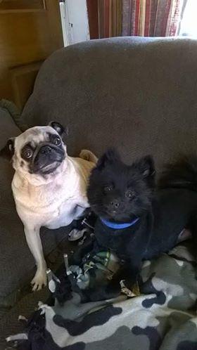 Bella & Bandit